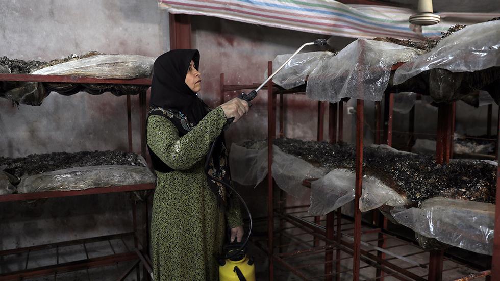 اشتغالزایی حمایتی برای مردم زلزلهزدهی کرمانشاه توسط بنیاد برکت