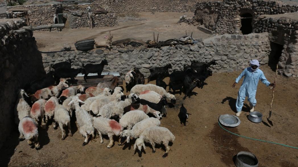 10 هزار و 500 شغل جدید برکت در خراسان جنوبی
