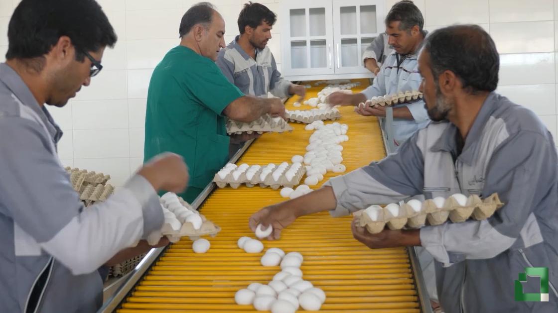 طرح توانمندسازی اقتصادی و اشتغالزایی بنیاد برکت: شرکت پهندشت بیرجند