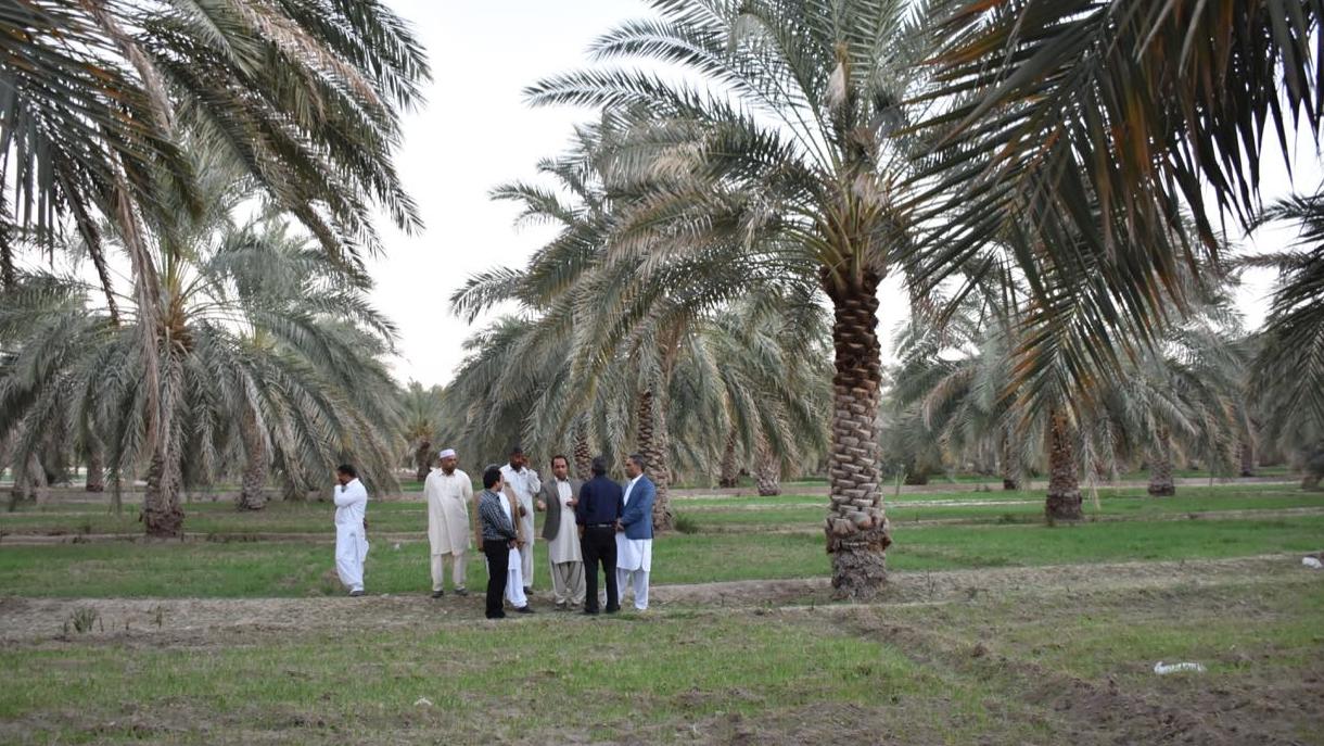تعزیز القدرة الاقتصادیة و الاجتماعیة لیسستان و بلوشستان بمساهمة و مساعدة مؤسسة البركة
